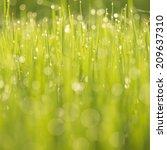 green background | Shutterstock . vector #209637310