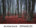 foggy mystic forest during... | Shutterstock . vector #209668150