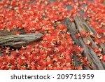 full frame background of pink... | Shutterstock . vector #209711959