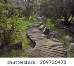 Wooden Deck Path Into A Forest