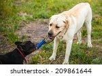 dog pulling rope | Shutterstock . vector #209861644