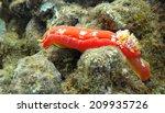 a spanish shawl nudibranch in... | Shutterstock . vector #209935726