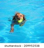 a labrador or golden retriever ... | Shutterstock . vector #209952538