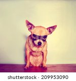 Stock photo a cute chihuahua with a mask on toned with a retro vintage instagram filter 209953090