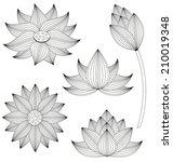lotus flower vector set on... | Shutterstock .eps vector #210019348