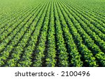 the rich green agricultural... | Shutterstock . vector #2100496