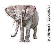 african elephant  loxodonta... | Shutterstock . vector #210058384