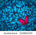 Stock photo beautiful background with lot of different butterflys 210081253