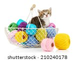 Stock photo cute little kitten in basket with thread isolated on white 210240178