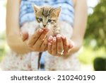 Cute Little Kitten In Hands...