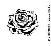 rose in black and white. eps 8. | Shutterstock .eps vector #210250150