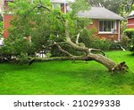 Fallen Tree Due To Storm Or...
