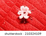 top view of leaf of and a flower | Shutterstock . vector #210324109