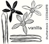 vanilla set. hand drawn vector... | Shutterstock .eps vector #210366898