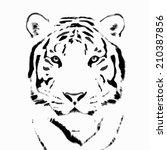 bengal tiger sketch silhouette  ... | Shutterstock . vector #210387856