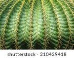 Close Up Textured Of Cactus...