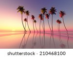 Coconut Palms At Pink Tropical...