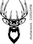 whitetail deer head. vector...
