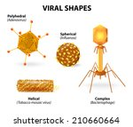 viral shapes. vector... | Shutterstock .eps vector #210660664