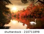 Swan On The Autmn River At...