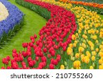 Flower Beds Of Multicolored...