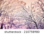 A Close Up Of Tree Branches...