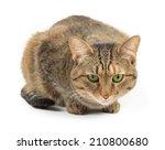 sitting tabby cat on white... | Shutterstock . vector #210800680