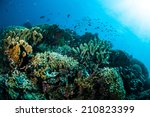 various hard coral reefs in... | Shutterstock . vector #210823399