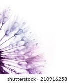 Dandelion with water drops -  color silhouette on white background -  super macro - stock photo