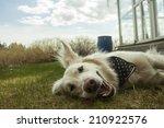Happy Dog On Grass  In A Garden