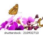 Beautiful Plain Butterfly On...