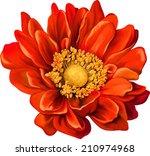 mona lisa flower  pink flower ... | Shutterstock .eps vector #210974968