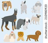 animal,bobtail,breed,bull,bulldog,collection,command,dachshund,defender,design,doberman,dog,flat,friend,home