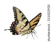 Swallowtail Butterfly   Papili...