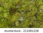 Soil Covered Of Green Soft Mos...