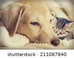 Stock photo puppy and kitten 211087840