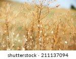 meadow during sunset  | Shutterstock . vector #211137094