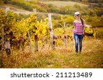 woman walks with the harvest of ... | Shutterstock . vector #211213489
