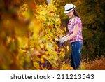 woman harvesting the grape | Shutterstock . vector #211213543