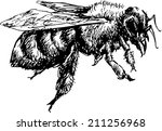 hand drawn bee   Shutterstock .eps vector #211256968