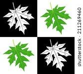 vector of leaves pattern on... | Shutterstock .eps vector #211269460