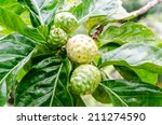 Close Up Of Noni Fruit And Leaf