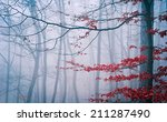 Tree In The Misty Autumn Forest