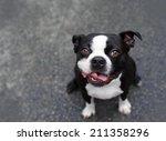 Stock photo cute slobbery dog 211358296