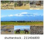 african wild animals safari... | Shutterstock . vector #211406800
