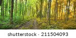 two seasons in the forest... | Shutterstock . vector #211504093