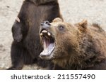 portrait of a brown bear - stock photo