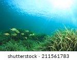 Seaweed Fish And Sun Underwater