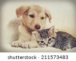 Stock photo kitten and puppy 211573483
