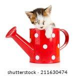 Cute Little Kitten In Watering...